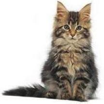 micio gatto